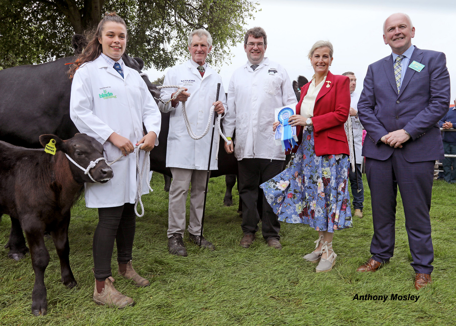Royal seal of approval for Melview Angus